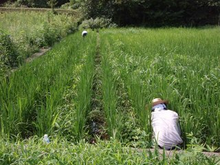 自然農2.jpg